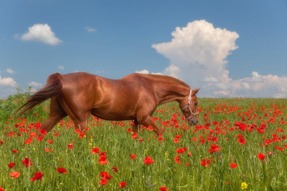 Картинка лошадь весна