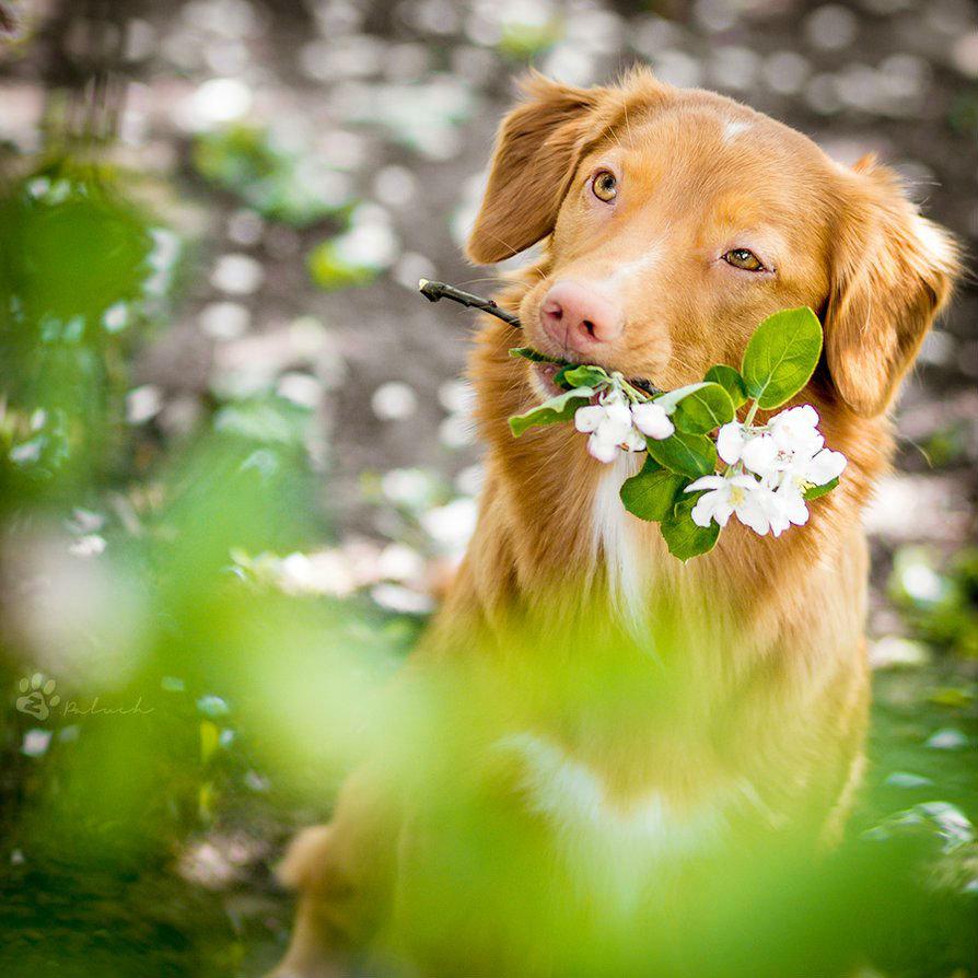 обстоятельство позволяет щенок с цветами в зубах фото включенным розетке ночь