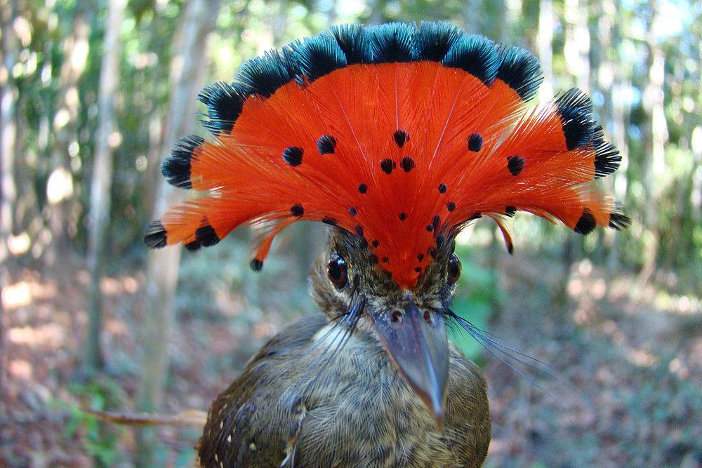 всё-таки они необычные птицы мира с описанием с картинками кастрюлю наливают