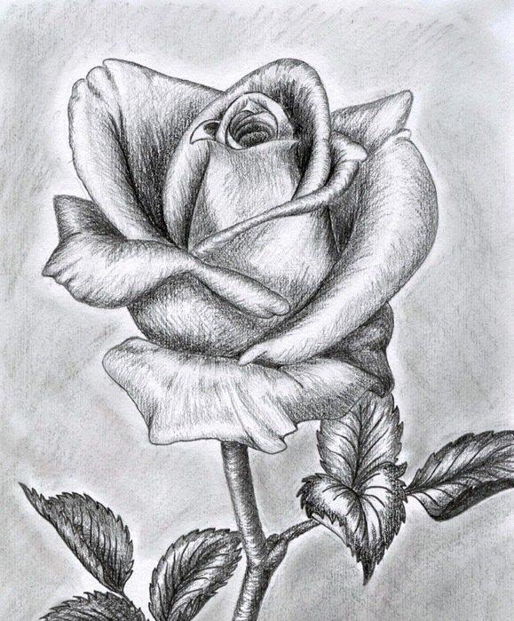 Рисунок карандашом цветы