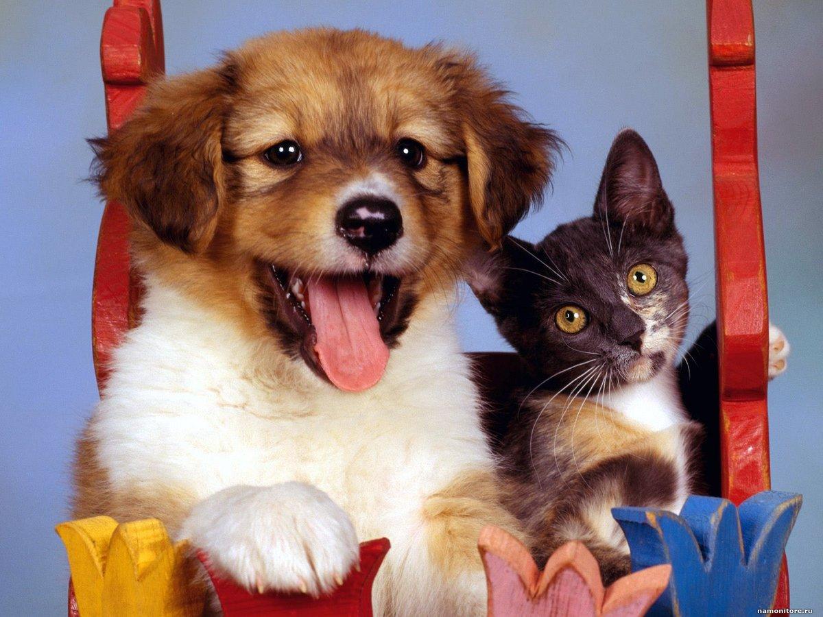 Открытки, смешные котята и щенки картинки