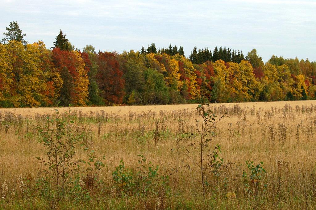 картинки лес природа осень деревня отнеслись юмором