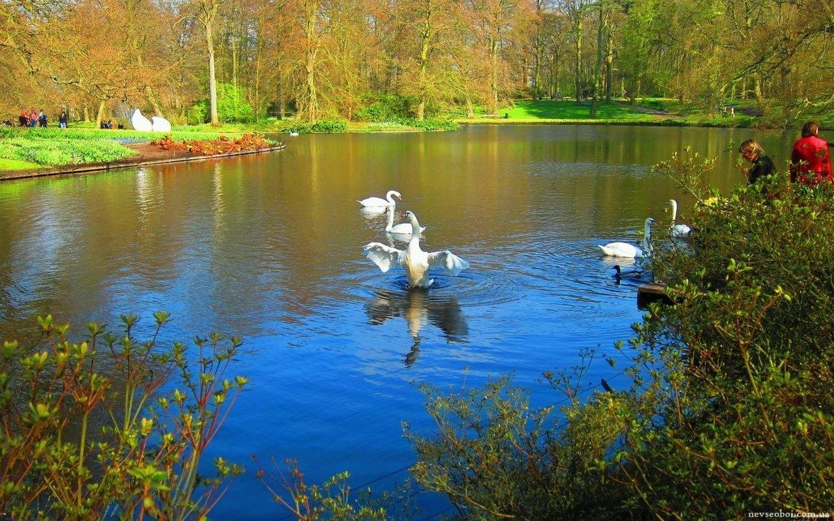 Фото с лебедями на озере и с водопадами