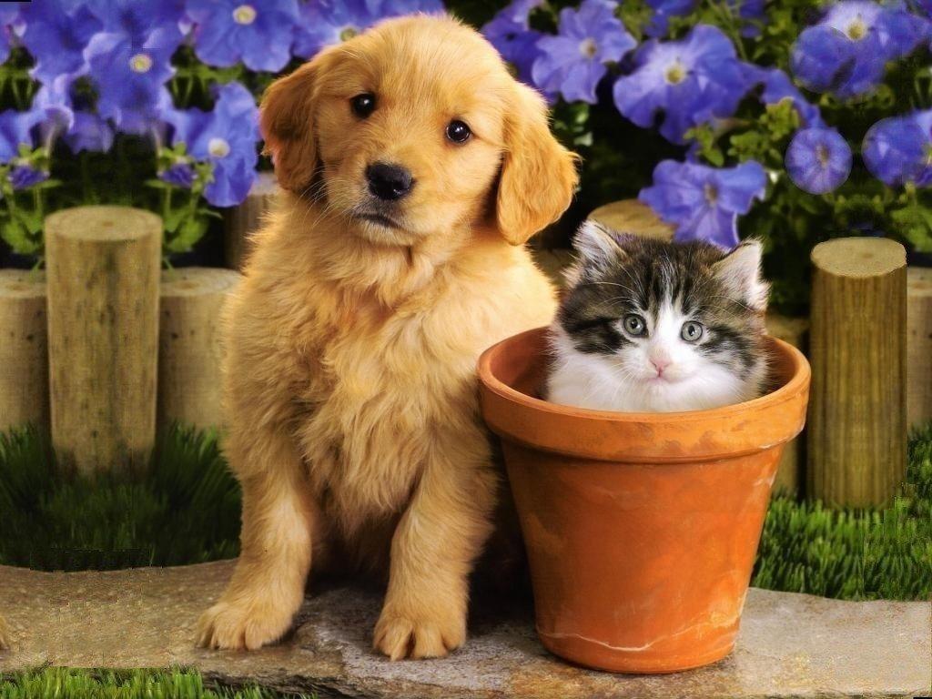красивые картинки про кошек и собак под