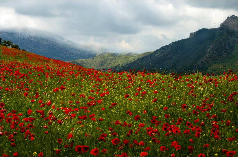 Можно купить, армения цветы фото