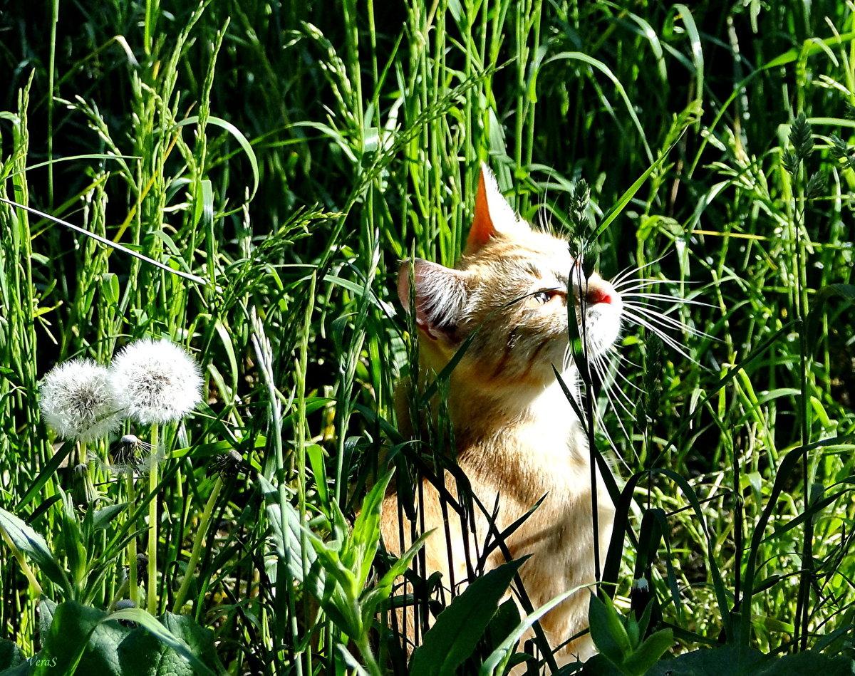 Картинки забавные кошки летом