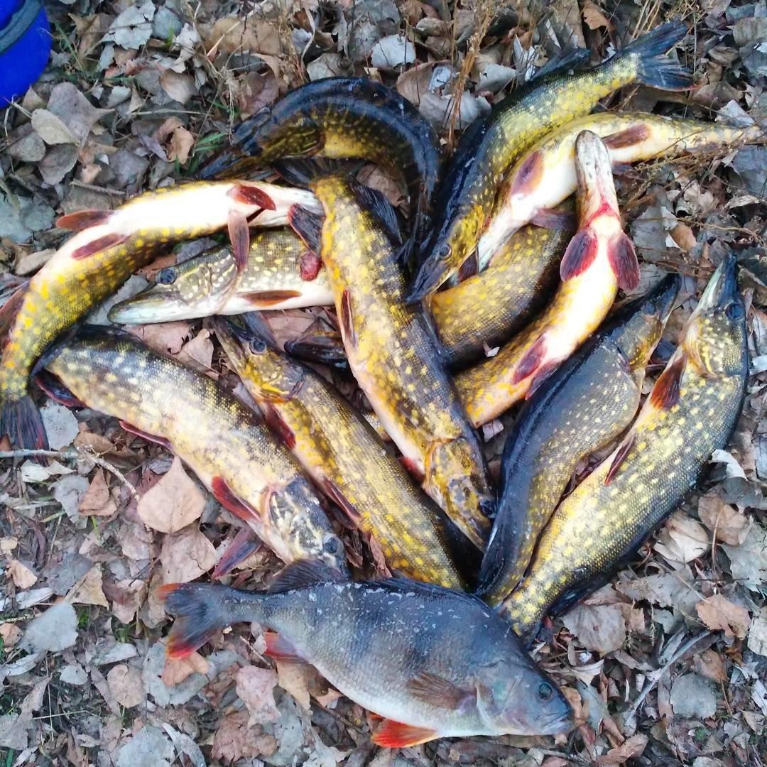 Где клюет в кирове рыба