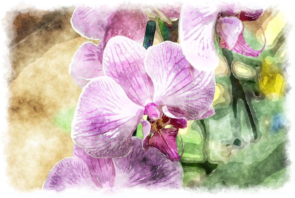 продаже орхидеи картинки на бумаге уплотнителя всему контуру