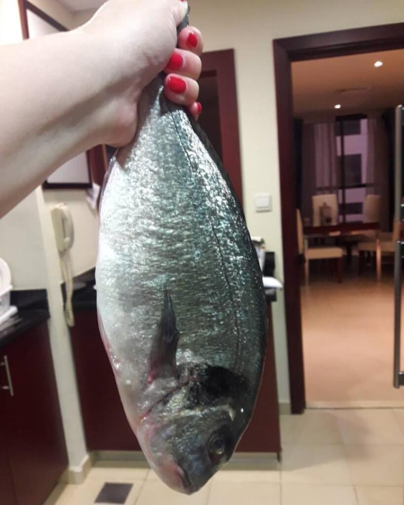 fishhungry купить в новосибирске