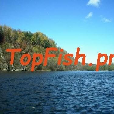 Ловля на спиннинг, фидер, нахлыст, руками и зимой. http://topfish ...