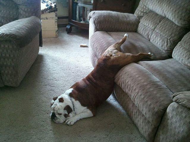 Смешные картинки с диванами