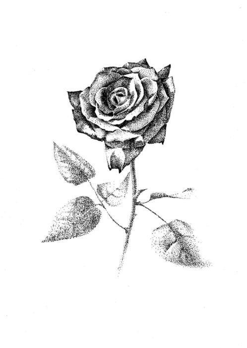Роза картинки нарисованные черной ручкой