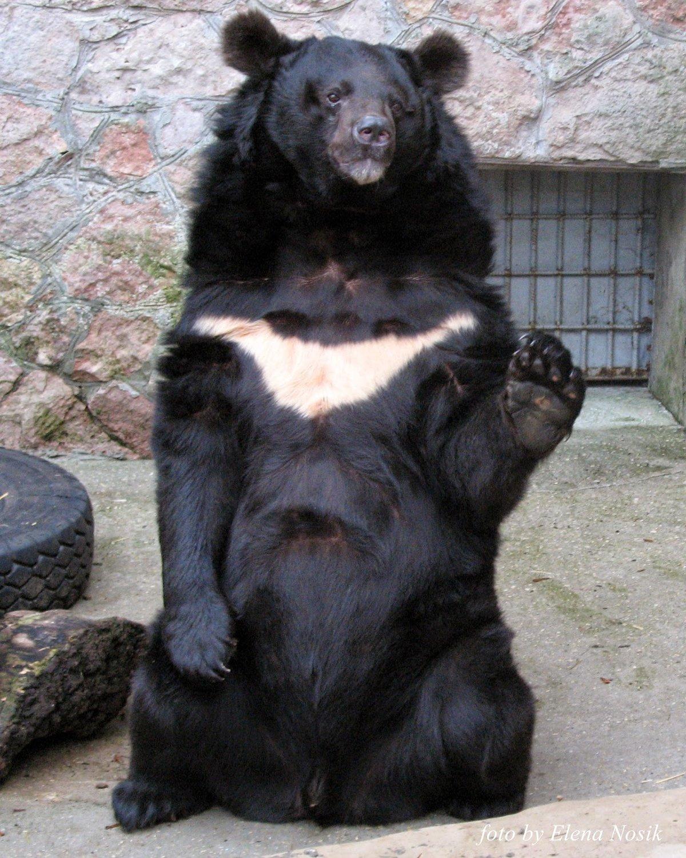 asiatic-black-bear-pictures-oldies-sex-milf-clip-videoa