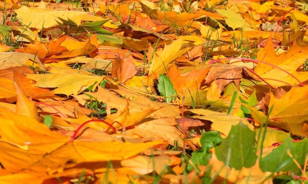 Картинки земля покрытая осенними листьями