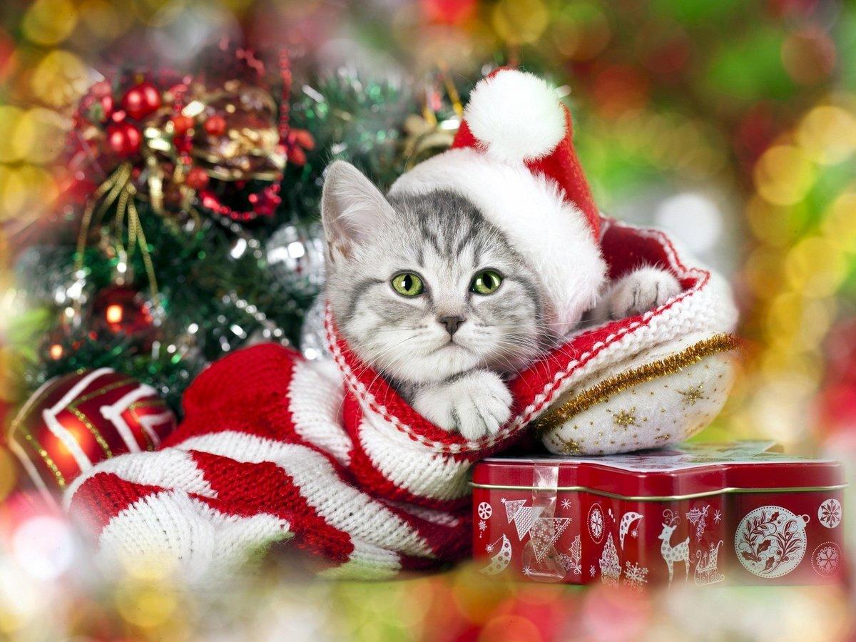 Открытки с новым годом котенком