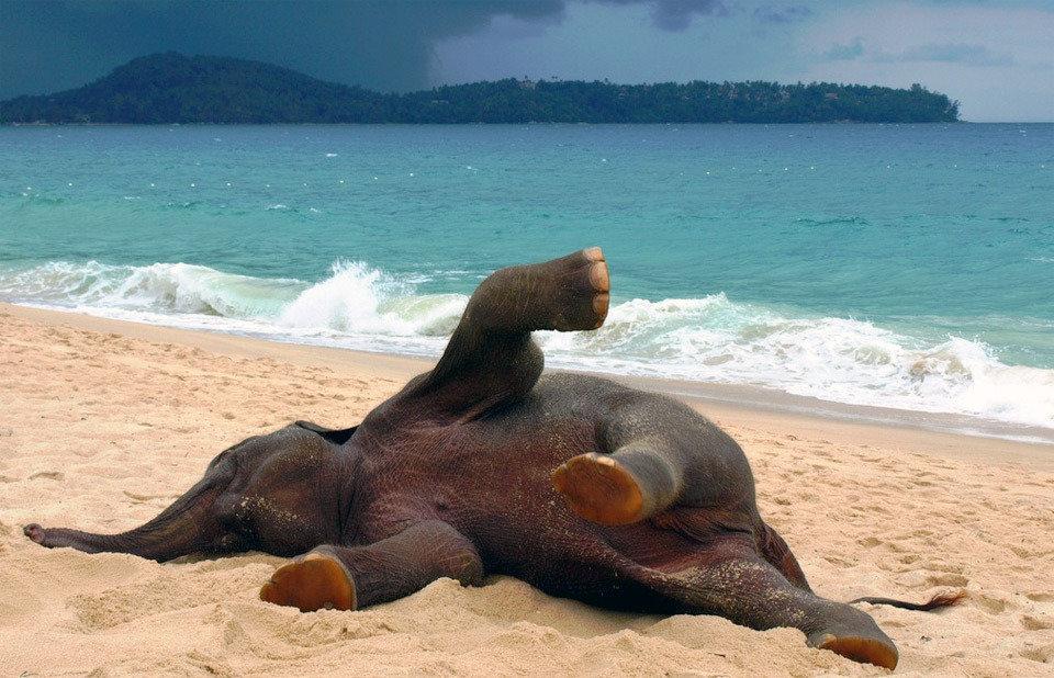 Спокойной ночи, прикольные картинки животных на пляже