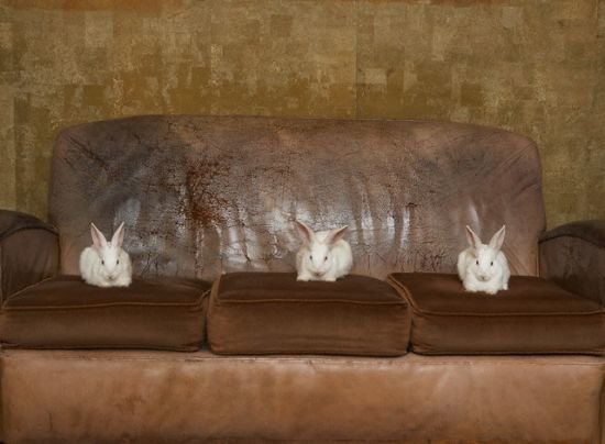 картинка зайцы на диване породы