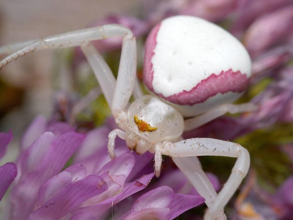 цветочный паук картинка работы судебным