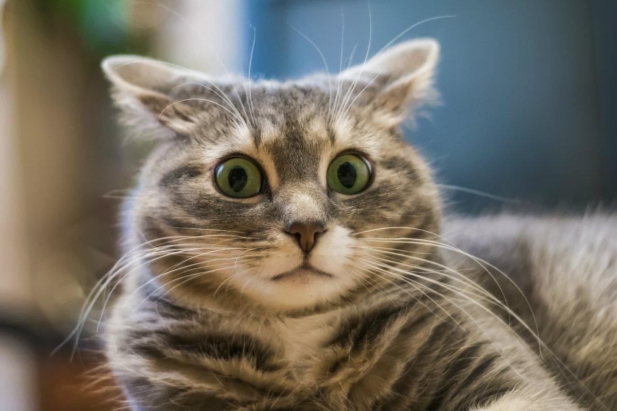 Интересные картинки про котов