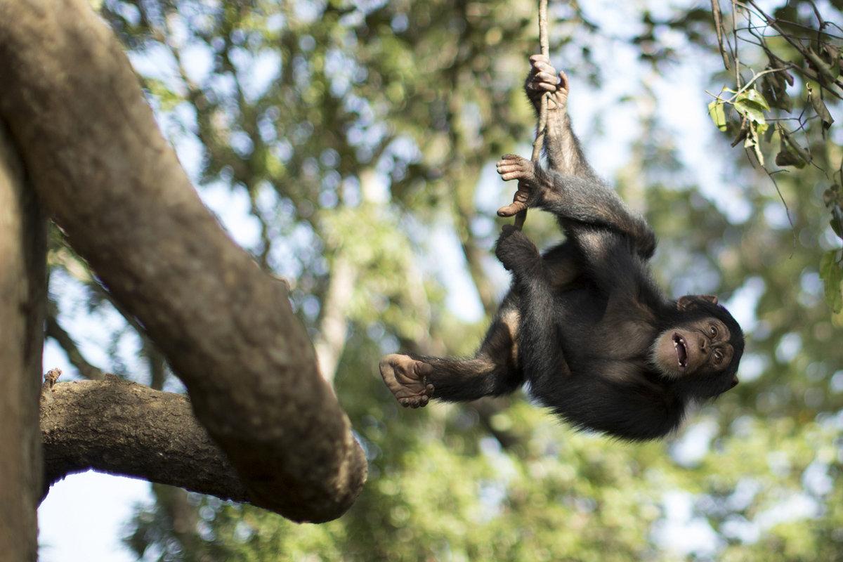 обезьянка на ветке картинки общие для