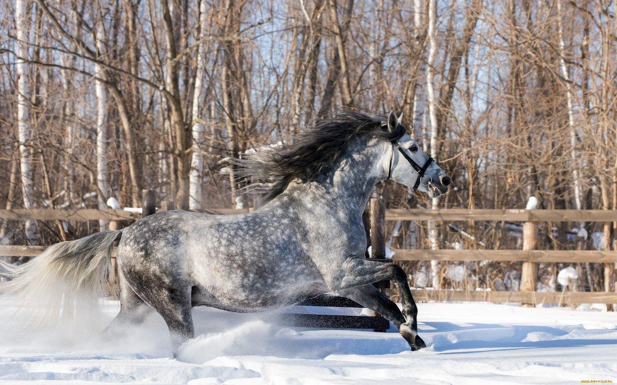 Картинка лошадь зима
