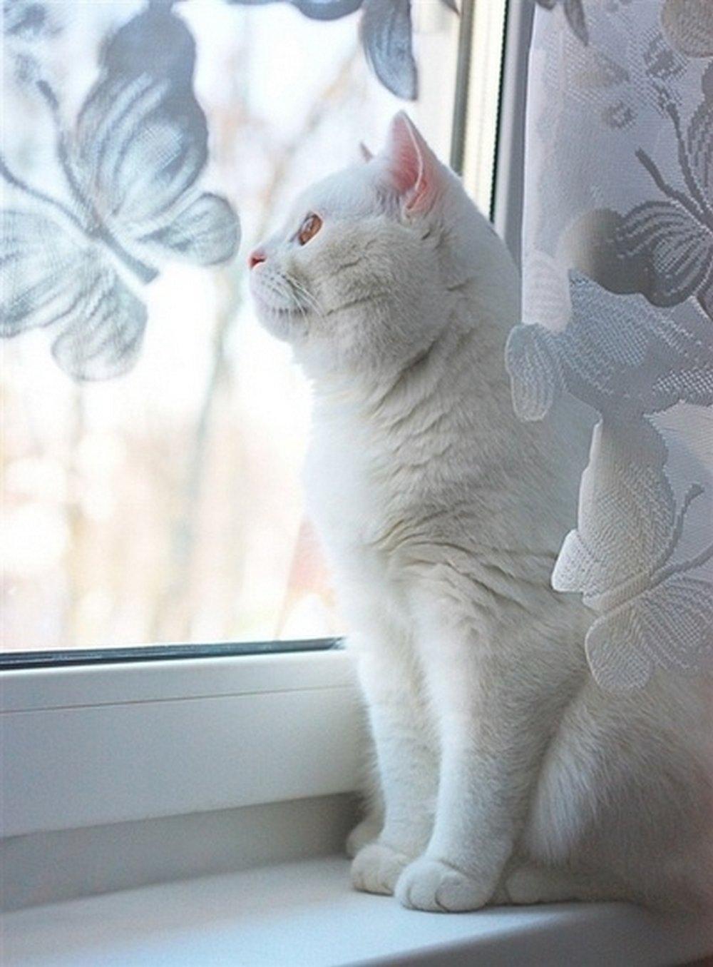 Белая кошка на окне.