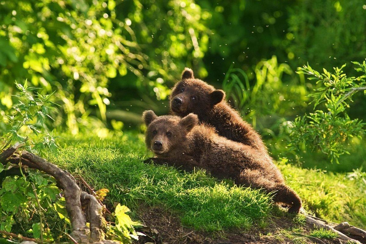 Картинки красивые про природу с животными