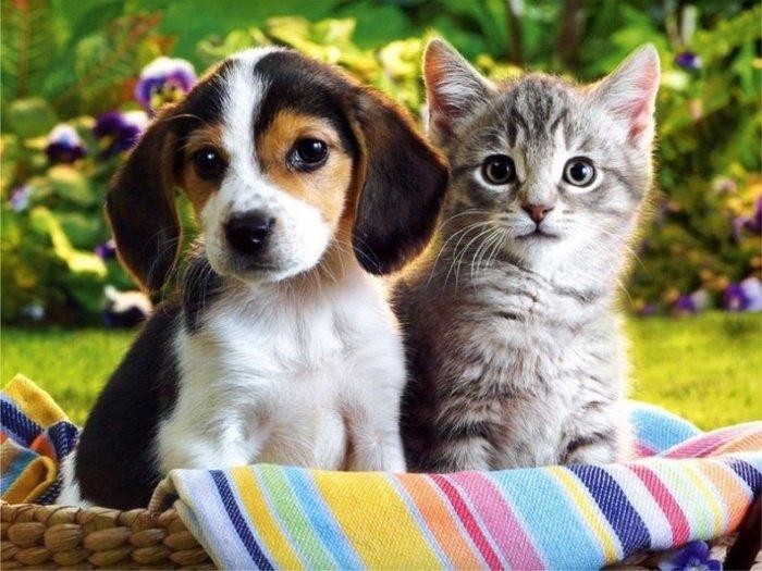 котята и щенок рисунки