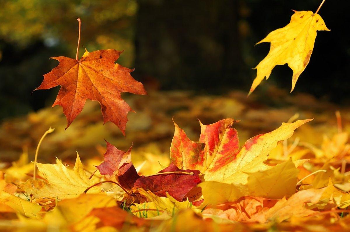 Осенний листопад картинки