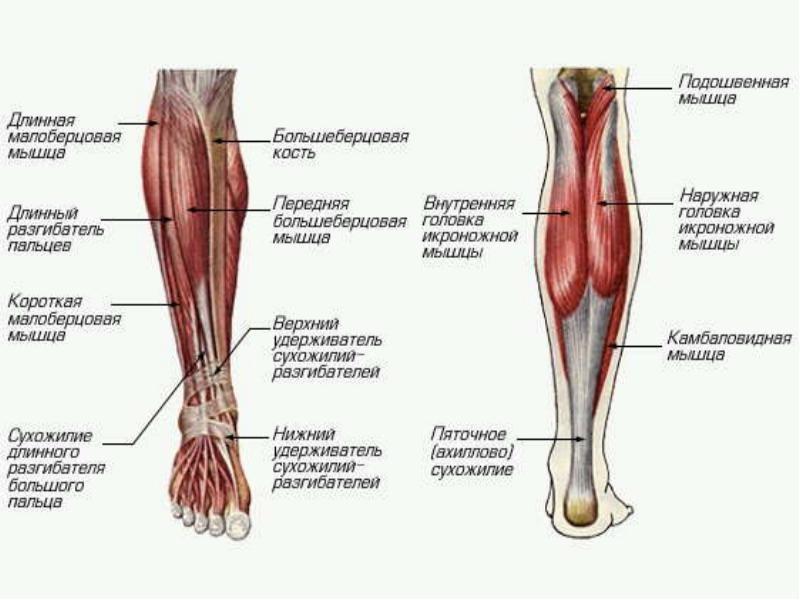 правы. у ребенка болит нога ниже колена спереди попробовать все