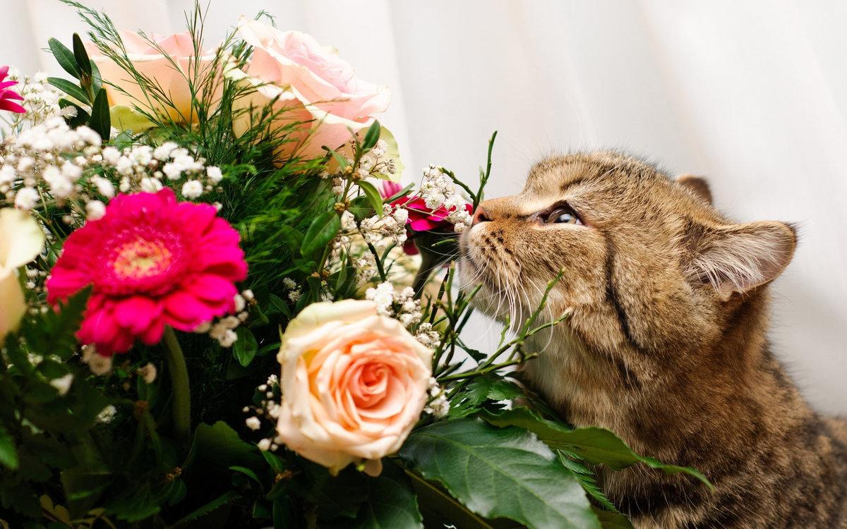 Дня тебе, цветы и животные картинки