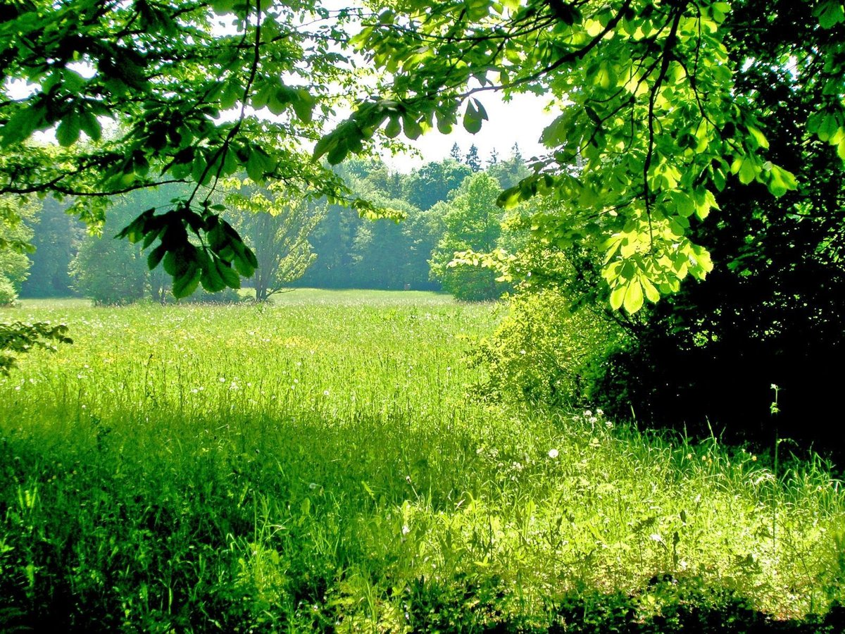 Summer Forest Wallpapers Group 82