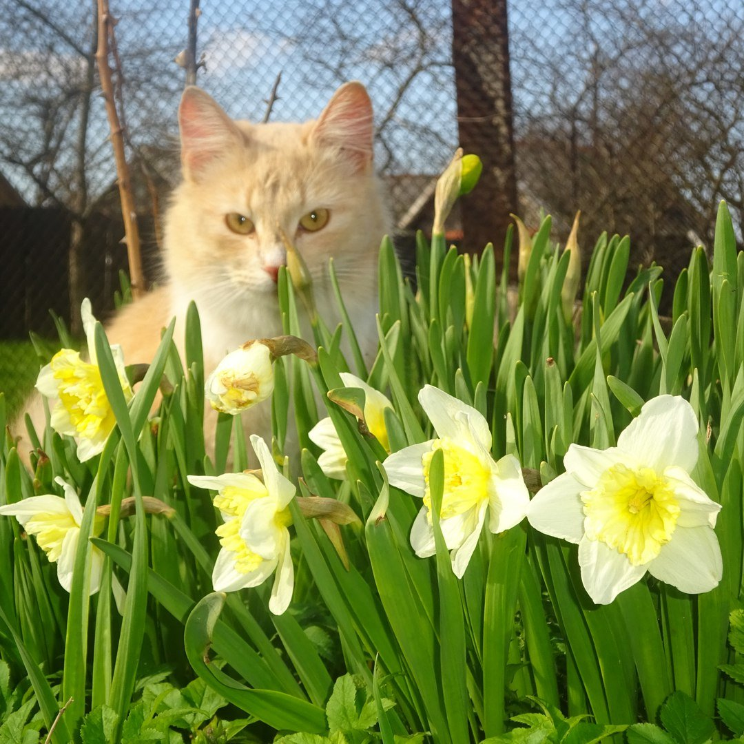 Весна и котики картинки