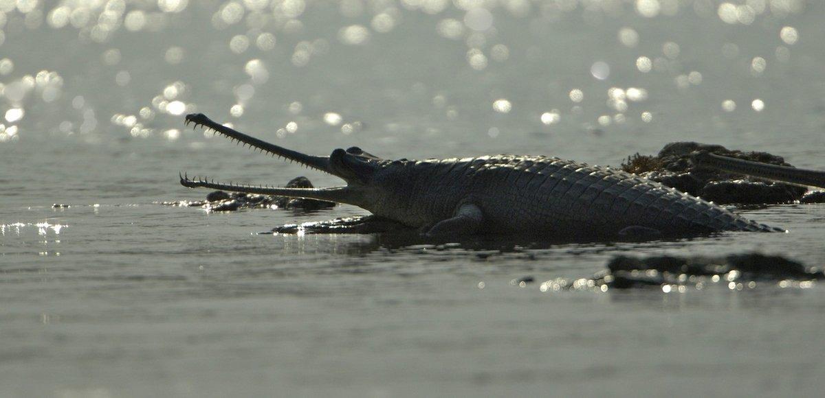 Картинки крокодилы