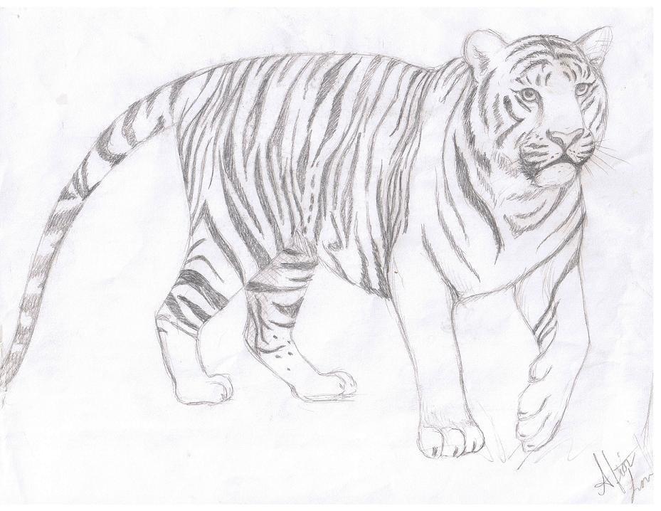 Картинки в карандаше тигр