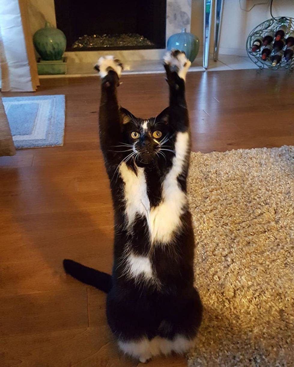 this cat keeps putting its paws in the air and nobody - 750×936
