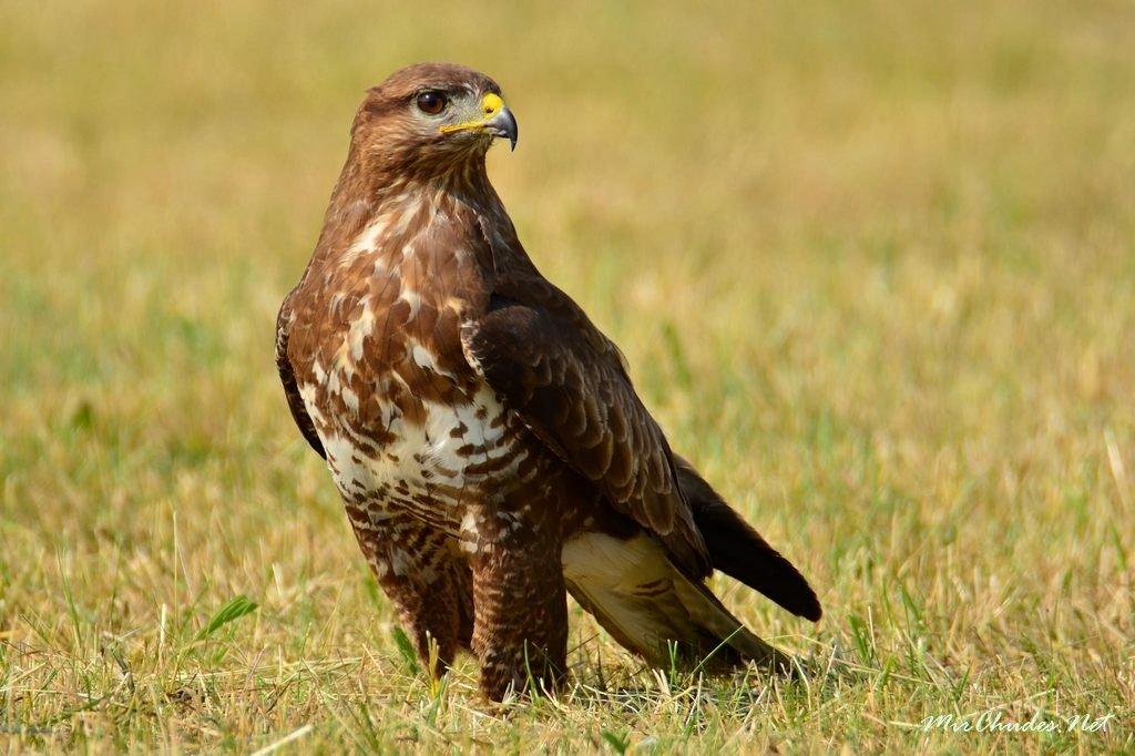 ещё хищные птицы воронежской области фото с названиями самом