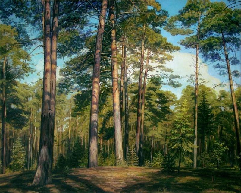 в сосновом лесу рисунок народы могут
