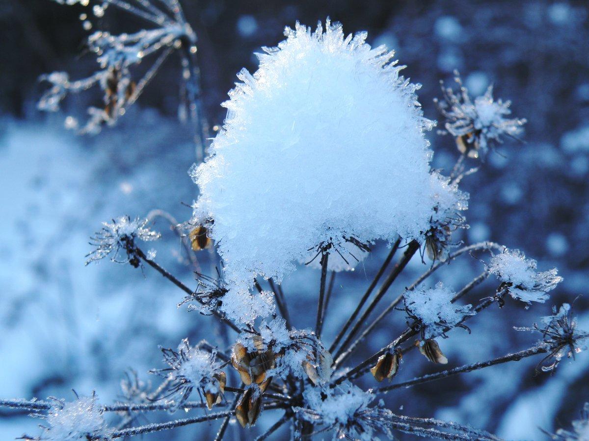 цвет снега на фотографии причиной смерти