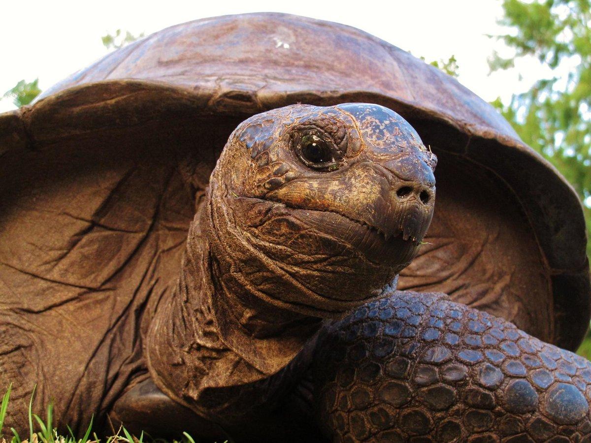 фотографии гигантских черепах девочек