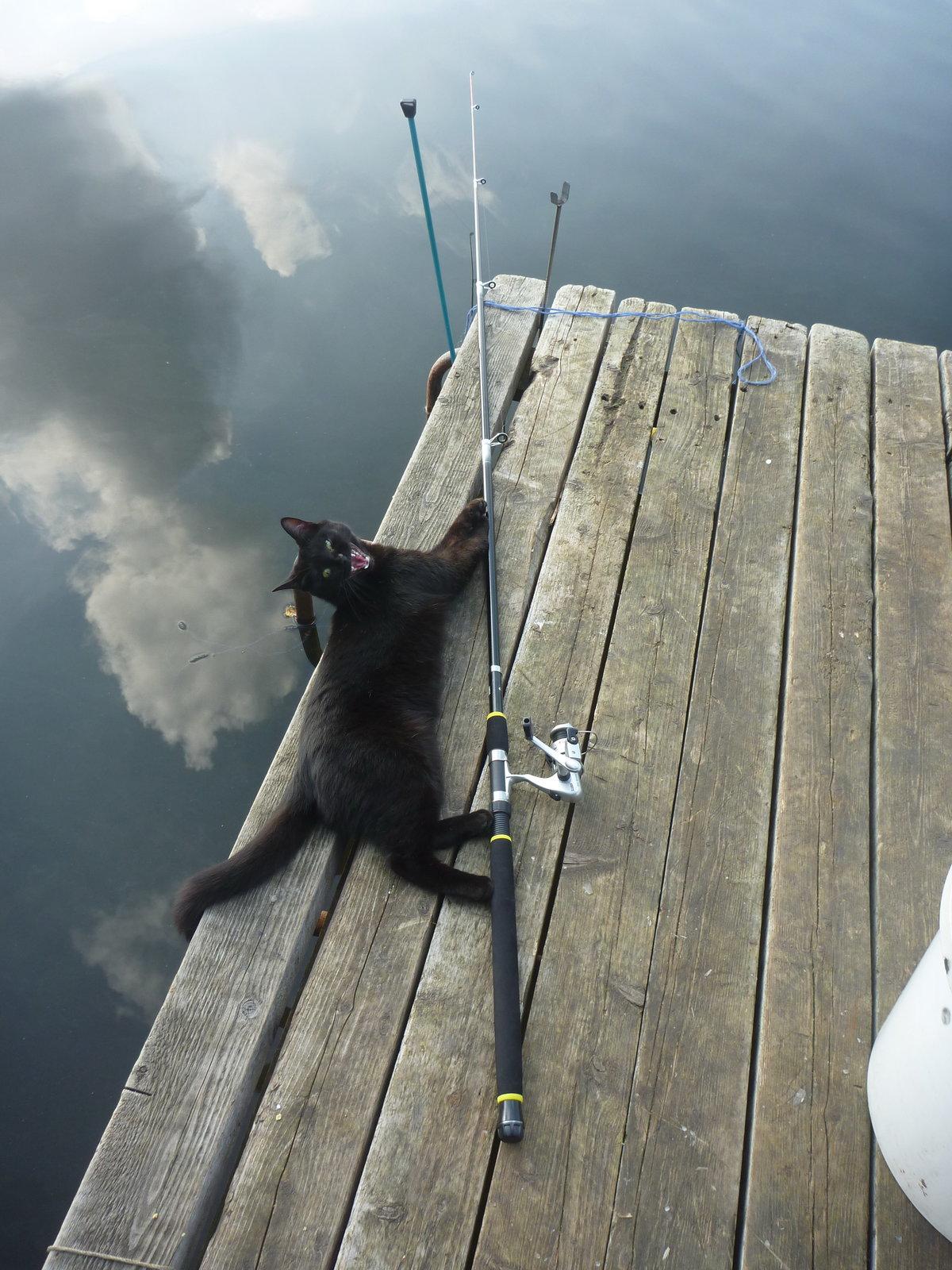 Картинки кот на рыбалке с удочкой, девушке