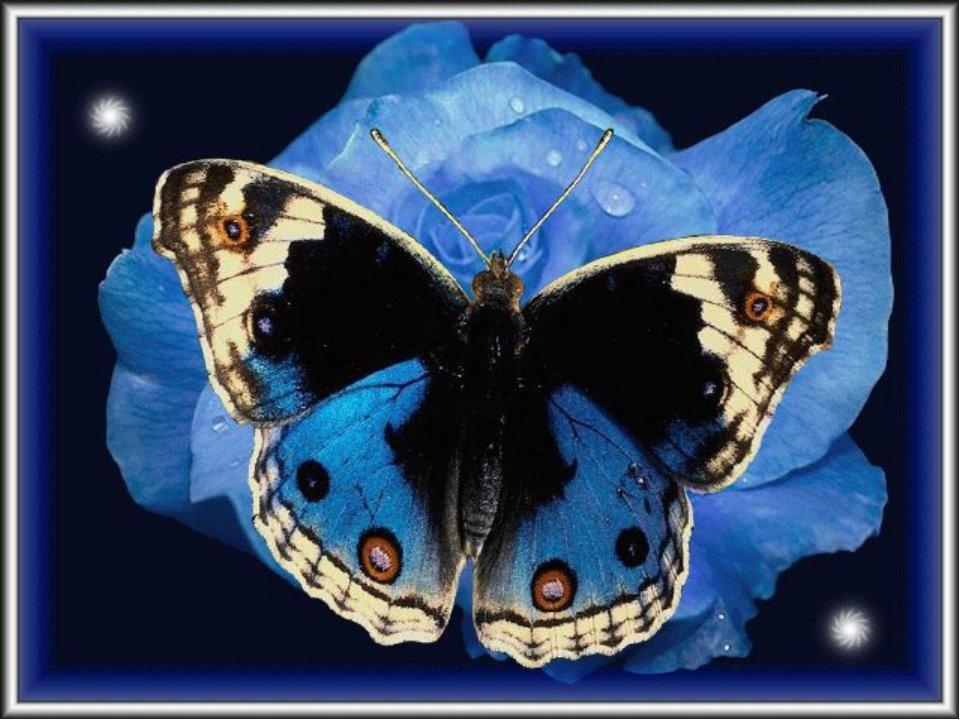 Анимационные открытки с бабочками
