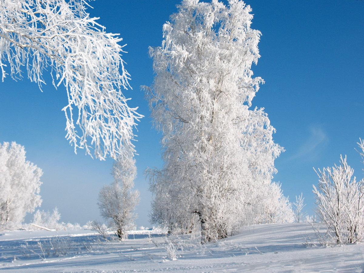 Зима морозная картинка