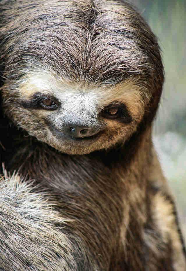 Картинки гифки, прикольная картинка ленивец