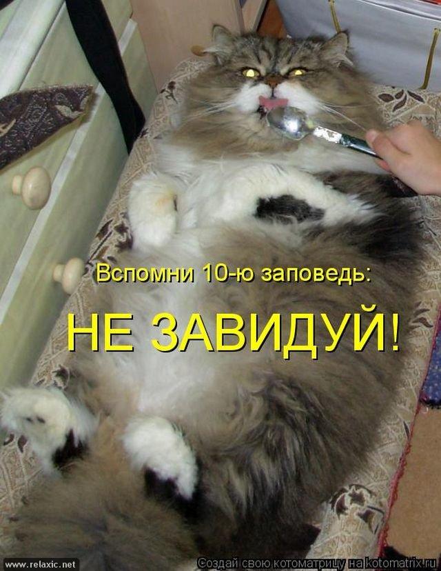 Поздравляем, приколы с надписями в картинках с животными до слез