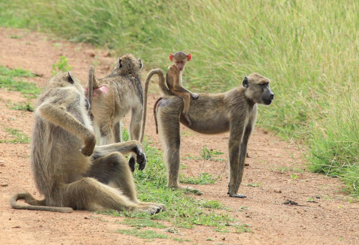 Прикольные картинки семья животные
