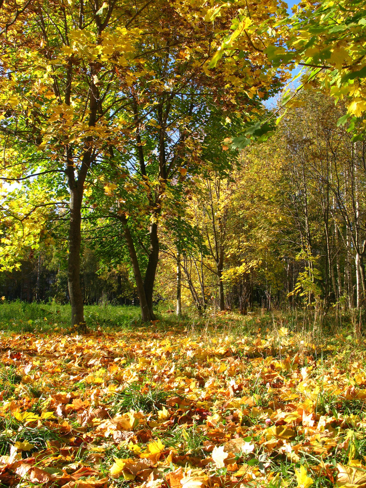 фотографии видами картинка осенней полянки леса мужчин рода раевских