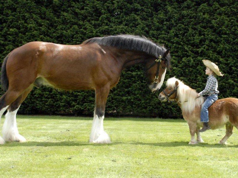 Картинки лошадей красивые и пони в парке