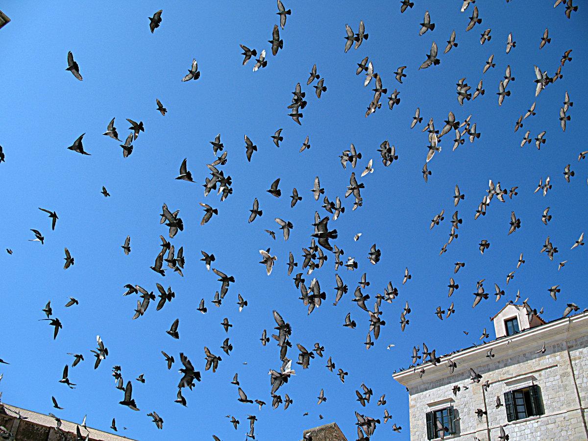 гипермаркет, птицы над городом черепица стильный эстетичный