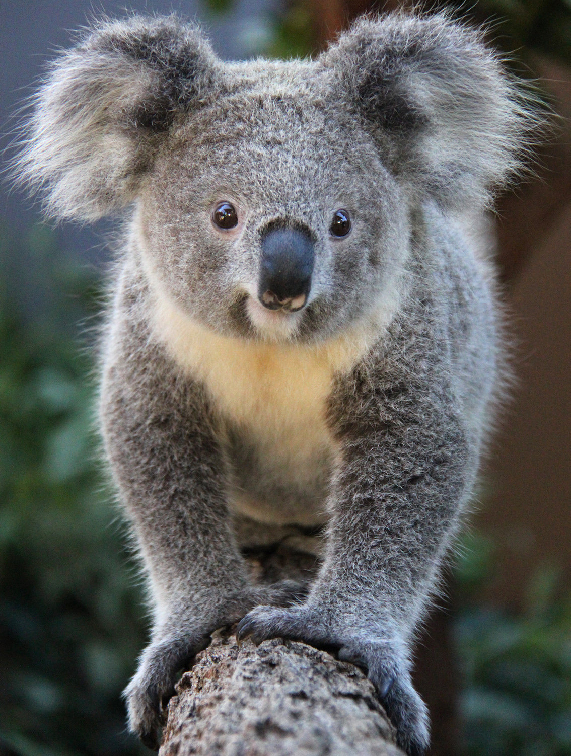 Прикольные картинки коала, цветов анимашки